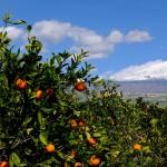 Riserva-biosfera-Sicilia-UNESCO DSCF5025