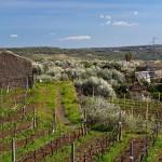 Riserva-biosfera-Sicilia-UNESCO DSCF5047