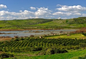 Sostenibilità ai tempi del Covid-19: consigli pratici per aiutare l'ambiente e l'agricoltura locale